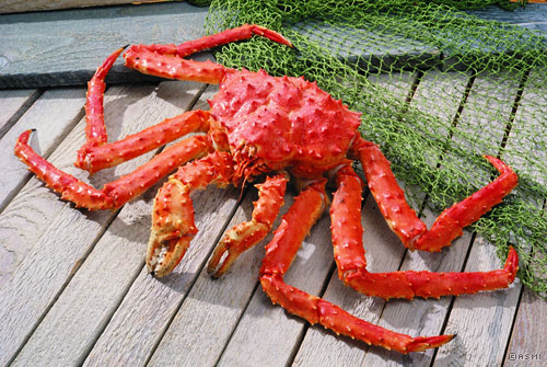 Alaska King Crab King Crab Facts Captain Jack S