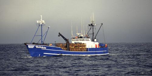 Alaskan King Crab Fishing Prices Amp Sizing Captain Jack